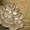 Мицелий грибов вешенка #376869