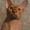 Лапушки котятушки Канадского сфинкса #1006392