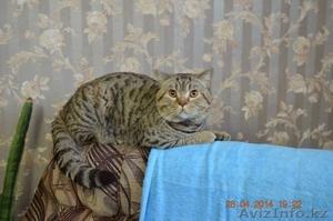 Продам красивых британских котят  - Изображение #1, Объявление #1199465